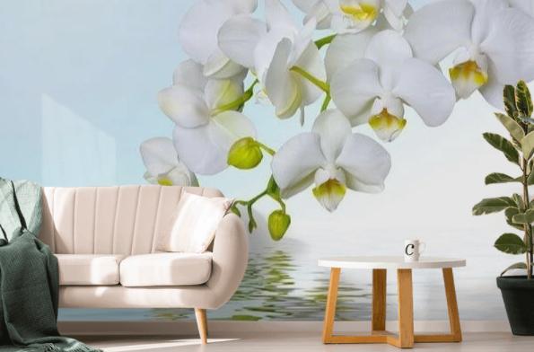 orchidea (4)