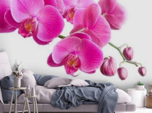 orchidea (6)