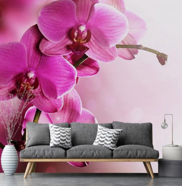 orchidea (7)