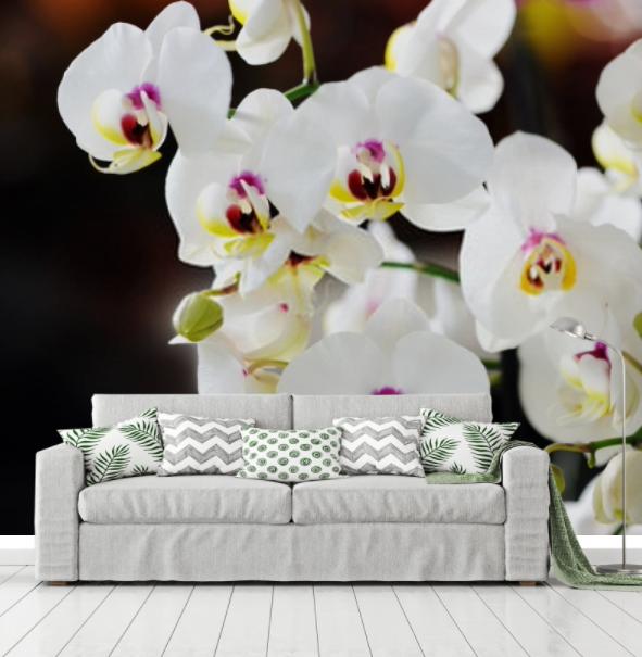 orchidea (8)