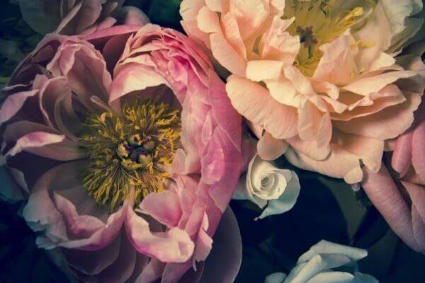 Jeden z hitów sprzedaży w 2020 roku - tapeta z piwoniami. Modne ciemne tło i jaskrawe kwiaty znalazły swoje miejsce w niejednym wnętrzu.