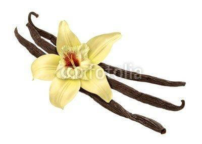 Fototapeta Vanilla Bean and Flower (clipping path)