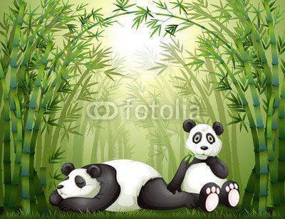 Fototapeta Two pandas in the bamboo forest