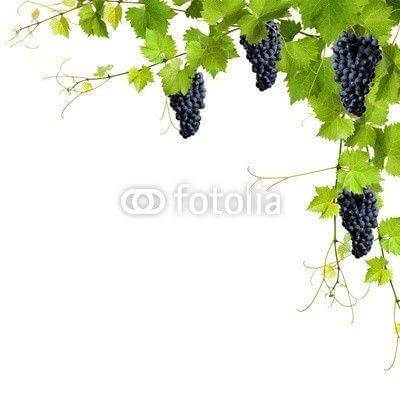 Fototapeta Collage of vine leaves and blue grapes