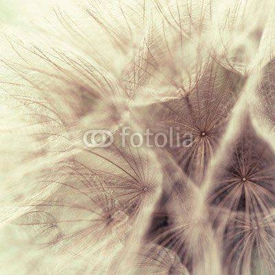 Fototapeta Abstract closeup of a meadow salsify