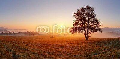 Fototapeta Alone tree on meadow at sunset with sun and mist - panorama