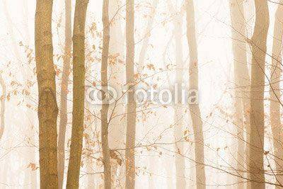 Fototapeta Trees quickly disappearing in yellow bright fog